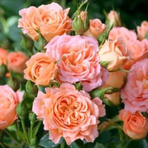 Fleurs groupées